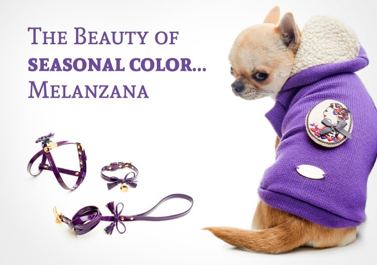 The Beauty of seasonal color Melanzana