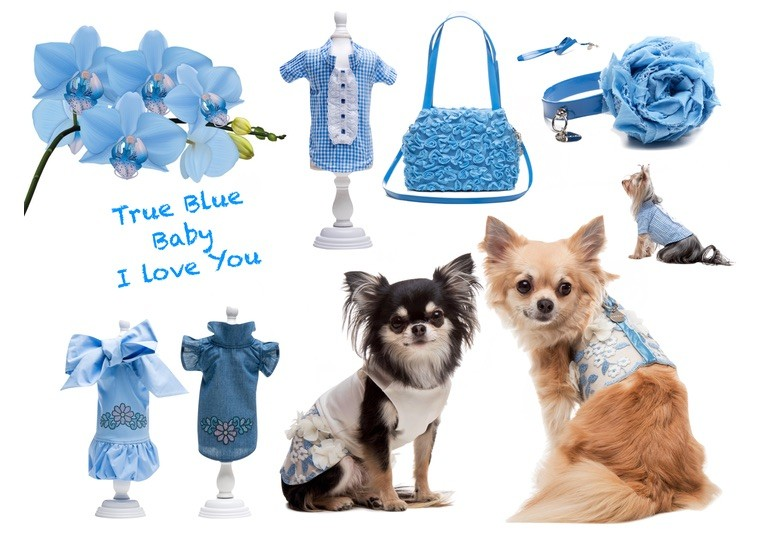 Dresses for dogs - Inamorada