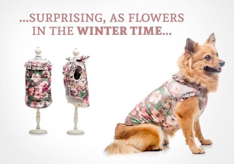 Surprising as flowers in winter time